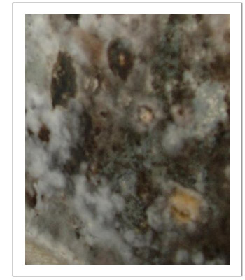 Toxic Mold Lawyer | AA Accident Attorneys